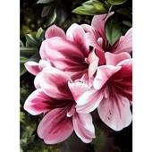 Картина по номерам Роспись на холсте Розовая лилия 2911 40*30
