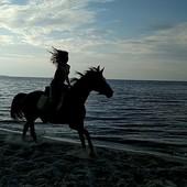 Верховая езда. Прогулки на лошадях