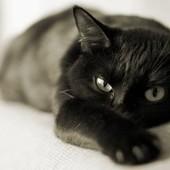 Самый любимый, добрый и исключительно красивый черный кот