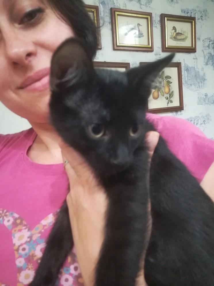 Отдам котенка в хорошие руки фото №1