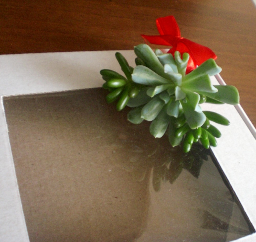Декор і оформлення подарунків фото №1