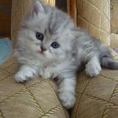 Самые красивые котята