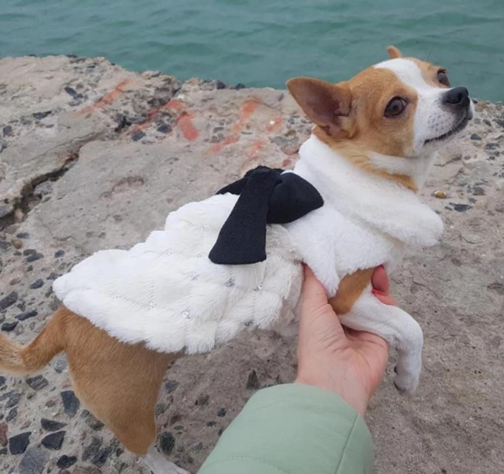 Пальтишко для мини собачки или котика фото №1