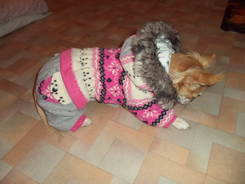 Комбинезон для собачки-девочки, комбенизон, одежда, костюм фото №1
