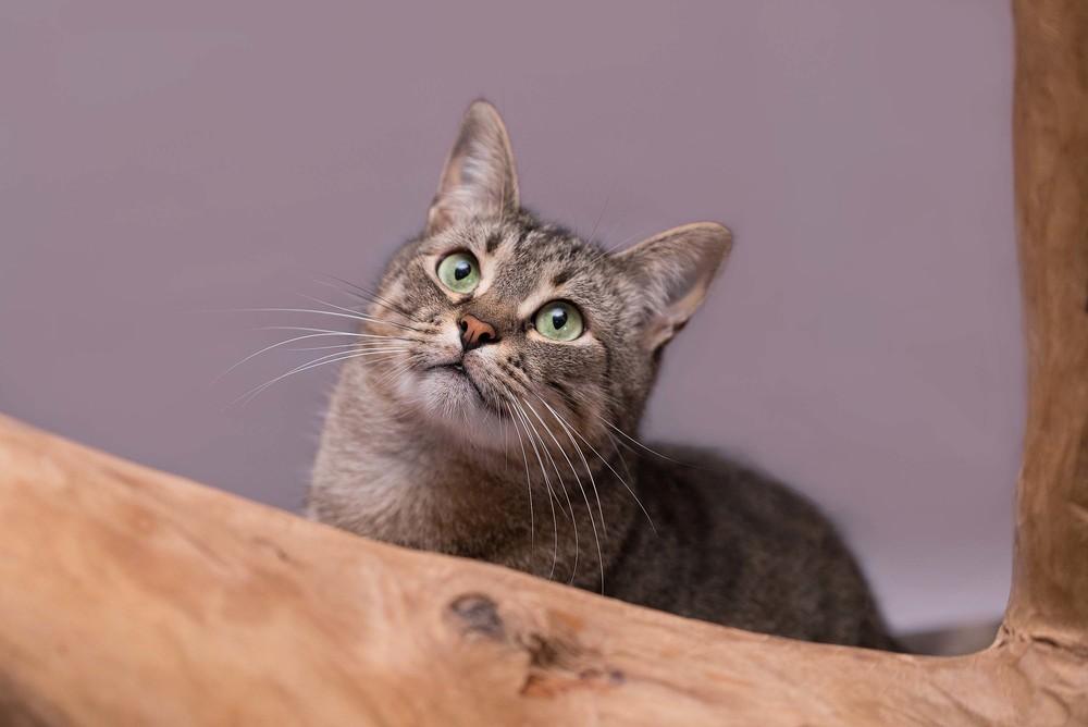 Отдам в хорошие руки котика тимоху фото №1