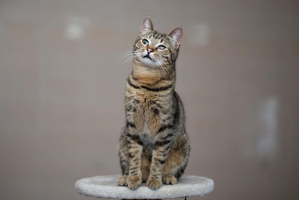 Отдам в хорошие руки молодого котика кутика фото №1
