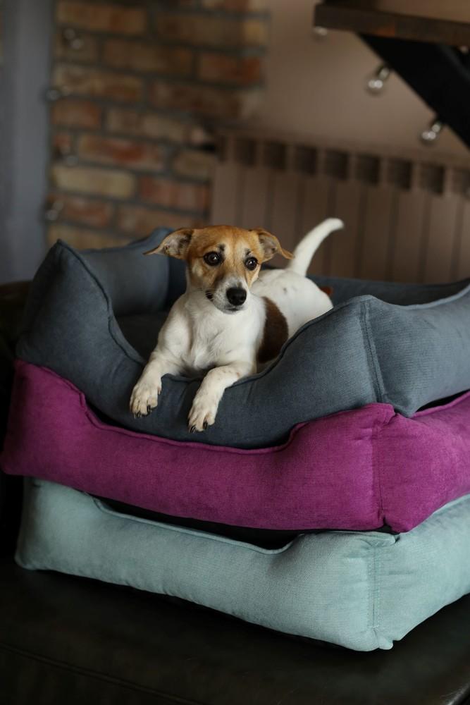 Лежанка для собак. лежанки для животных. лежак для собак. фото №1