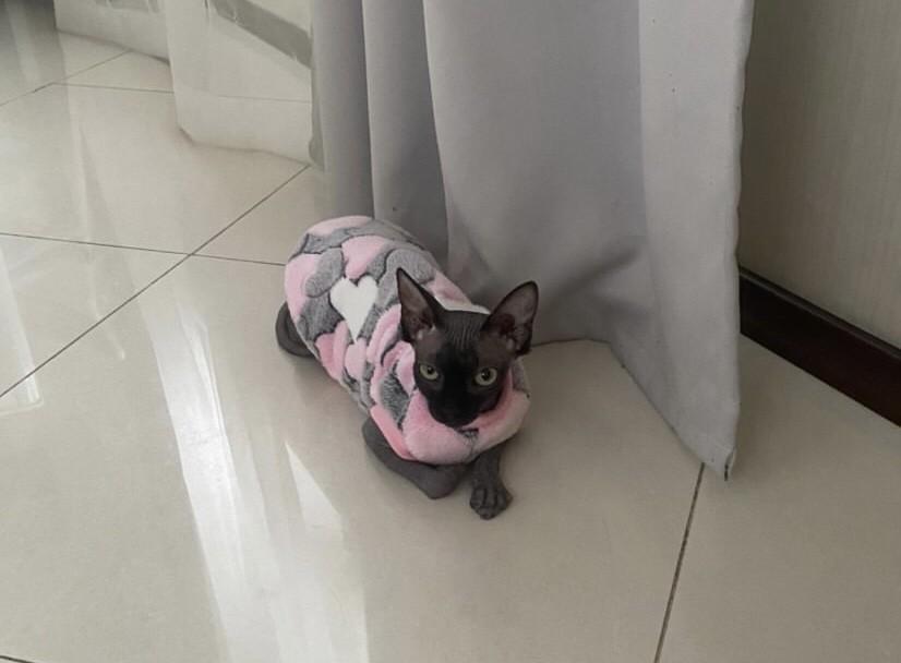 Жилет для кошки сердечки махра фото №1